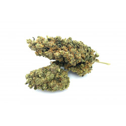 https://www.king-of-cbd.com/fleurs-de-cbd/59-amnesia.html